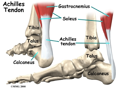 foot_achilles_tendon_anatomy01